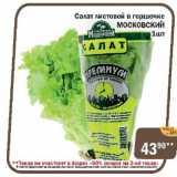 Салат листовой в горшочке МОСКОВСКИЙ, Количество: 1 шт