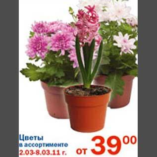 Цветы в перекрестке цены
