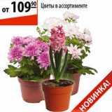 Магазин:Карусель,Скидка:Цветы