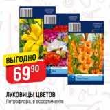 Скидка: Луковицы цветов Петрофлора