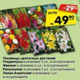 Луковицы цветочных растений Гладиолусы в упаковке 3 шт., в ассортименте Фрезия в упаковке 6 шт., в ассортименте Ранункулюс в упаковке 3 шт., в ассортименте Лилия Азиатская в упаковке 1 шт., в ассортименте