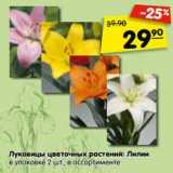 Луковицы цветочных растений: Лилии в упаковке 2 шт., в ассортименте
