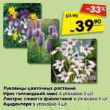 Луковицы цветочных растений Ирис голландский микс в упаковке 5 шт. Лиатрис спиката фиолетовая в упаковке 4 шт. Ацидантера в упаковке 4 шт.
