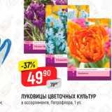 Скидка: Луковицы цветочных культур Петрофлора