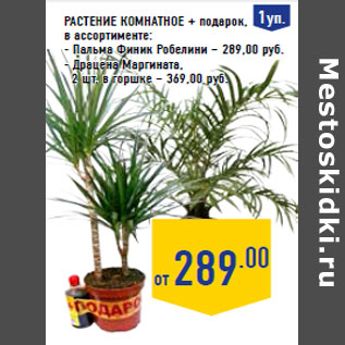 Комнатные растения как подарок