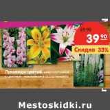 Луковицы цветов многолетников с цветной наклейкой в ассортименте