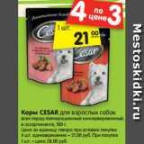 Корм CESAR для взрослых собак всех пород полнорационный консервированный, в ассортименте, 100 г. , Вес: 100 г