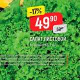 Верный Акции - Салат листовой в горшке